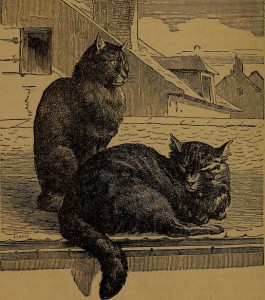 Two cats on a rooftop