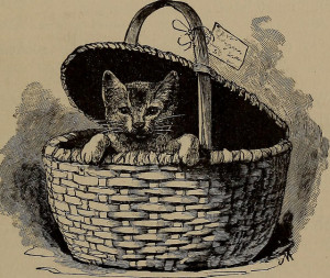 Kitten peeking out of a picnic basket