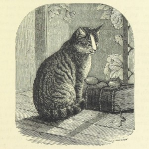 Cat looking at glasses on book