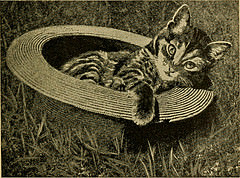 Cat in a wicker hat