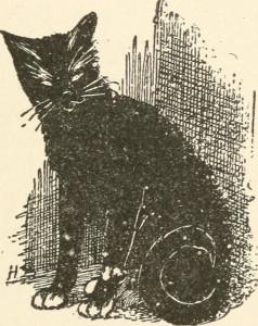 """""""Tom Cat"""""""
