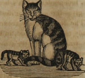 """She-cat & kittens"""