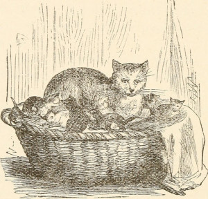 Cat and kittens in laundry basket