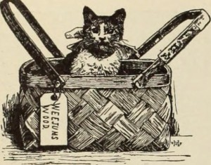 Cat in a picnic basket