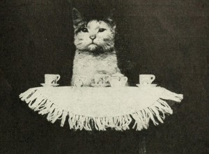 Cat with teacups