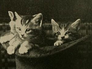 51-3catsinatophat