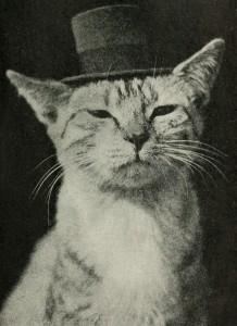 53-catwearingtophat