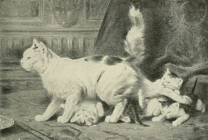 Angora cat with kittens swarming