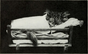 Kitten sleeping in tiny bed, covered with blanket