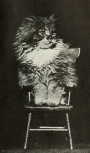 startled looking kitten on a cat-sized wooden chair