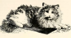 line drawing of a fluffy Persian cat