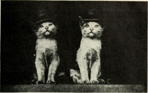 From Kittens and cats : a first reader / by Eulalie Osgood Grover (1911)