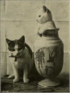two cats, one sitting and looking at camera, while a white cat stands in a vase