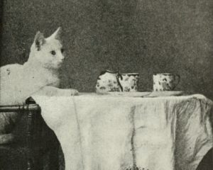 From Kittens and cats : a book of tales / Eulalie Osgood Grover (1911)