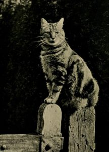 tabby cat sitting on a fence
