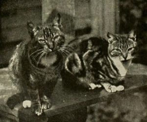 black and white photo of two tabby cats