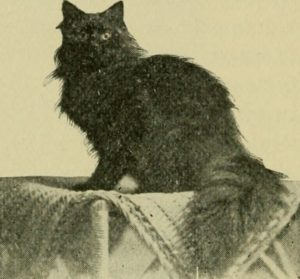 black Angora cat sitting on a stand