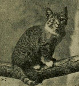 black and white photo of a tabby cat sitting on a tree branch