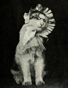 black and white photo of a cat wearing cat-sized eyeglasses and a bonnet