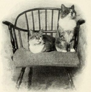 black and white photograph of two cats sitting on a wooden chair with a padded seat