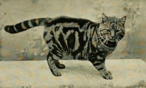 black and white photo of a tabby cat