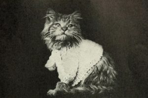black and white photo of a long haired kitten wearing a light-colored crochet sweater