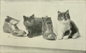 black and white photo of two cats sitting next to two well-worn boots