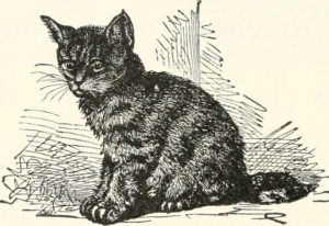 black and white drawing of a striped short haired cat