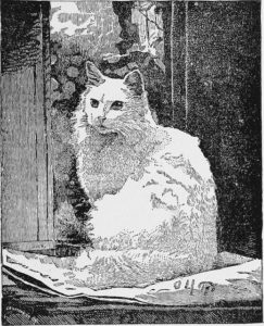 drawing of a long haired white cat sitting on a surface