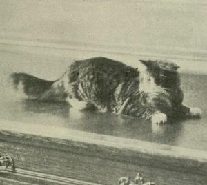 black and white photo of an angora cat lying on a large wooden desk