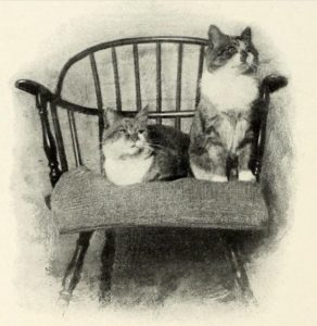 black and white drawing of two cats sitting on a wooden chair