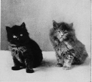 black and white photo of two fluffy kittens sitting and looking at the camera
