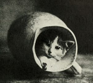 black and white photo of a kitten's face emerging from an overturned pitcher