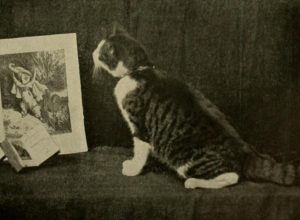 black and white striped cat looking at a painting of a cat in nature