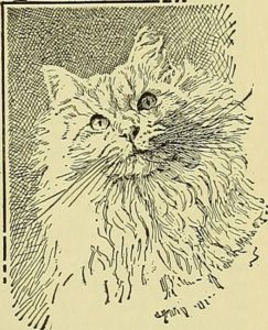 drawing of a long-haired light-colored cat's face