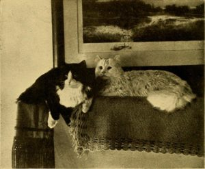 black and white photo of two longhair cats sitting on a table covered by a rug