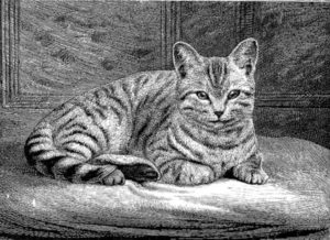 black and white drawing of a striped kitten